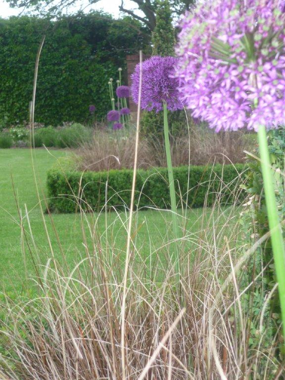 Alliums and grasses - private garden March Cambridgeshire