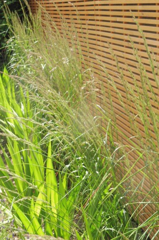 Private garden, Cambridgeshire Be-spoke timber screen, tall gras