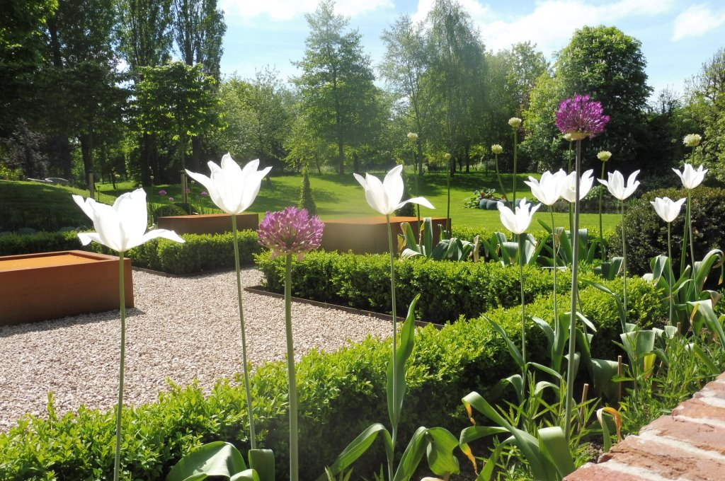 Private garden Herts. White tulips & alliums