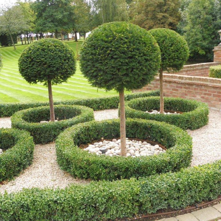 Specimen topiary standard taxus, buxus hedge & cobbles
