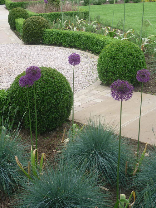 Topiary box spheres and Alliums.